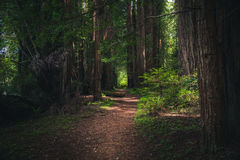 Weelderige bos wandelingsweg Royalty-vrije Stock Fotografie
