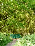 weelderige boslandschapsachtergrond met lege groene stoel en pa Royalty-vrije Stock Fotografie