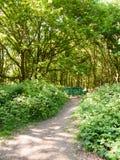 weelderige boslandschapsachtergrond met lege groene stoel en pa Royalty-vrije Stock Foto's