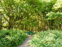weelderige boslandschapsachtergrond met lege groene stoel en pa Stock Afbeeldingen