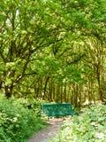 weelderige boslandschapsachtergrond met lege groene stoel en pa Stock Fotografie