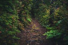 Weelderige bosweg Royalty-vrije Stock Foto's