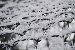 Weelderige de wintervorst op de tak in de ochtendtijd Royalty-vrije Stock Foto's