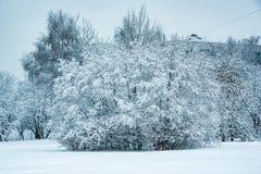 Weelderige die struik met weelderige sneeuw wordt behandeld stock fotografie