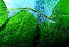 Weelderige groene bladeren Stock Afbeeldingen