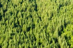 Weelderige Groene Bomen royalty-vrije stock afbeelding