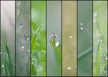 Weelderige groene grascollage Stock Foto's