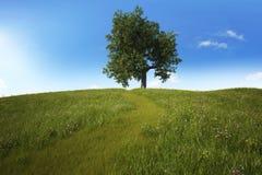 Weelderige groene heuvel met een reusachtige eiken boom op bovenkant Royalty-vrije Stock Foto's