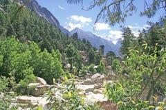 Weelderige groene himalayan bos en vallei en sneeuwpiekengangotri Royalty-vrije Stock Afbeeldingen