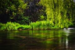 Weelderige groene installaties en bomen die langs de rivierbank bij ashford-in-de-Water in het Piekdistricts Nationale park groei stock afbeeldingen