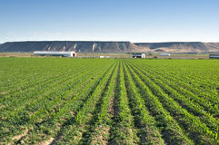 Weelderige groene landbouwgrond Royalty-vrije Stock Foto's