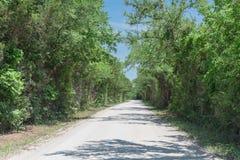 Weelderige groene luifelboom bij de vuillandweg in Texas, de V.S. royalty-vrije stock foto