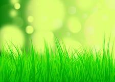 Weelderige groene natuurlijke de zomer of de lenteachtergrond Stock Fotografie