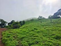 Weelderige groene weiden op de heuvels van Kodachadri stock foto's
