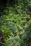 Weelderige groene wildernisachtergrond Royalty-vrije Stock Afbeeldingen