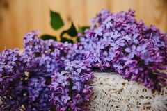 Weelderige heldere lilac dicht Stock Afbeelding