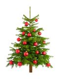 Weelderige Kerstboom met rode snuisterijen Stock Foto's