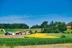 Weelderige landbouwgrond, Oostelijk Slovenië stock afbeeldingen