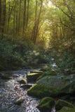 Weelderige rivier in bos stock foto