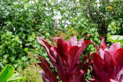 Weelderige tropische installaties van de Eilanden Hawaï royalty-vrije stock foto