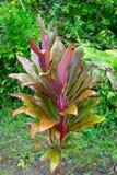 Weelderige tropische installaties van de Eilanden Hawaï stock foto