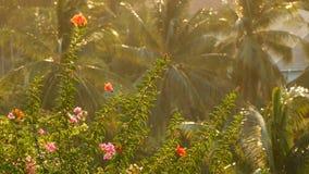 Weelderige tropische vegetatie in zonlicht Weergeven van groene bloeiende bloemen en palmen in helder gouden zonlicht stock footage