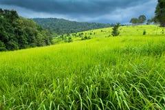 Weelderige tropische weide stock foto's