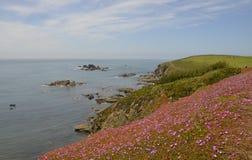 Weelderige Vegetatie op Hagedispunt, Cornwall Royalty-vrije Stock Afbeeldingen