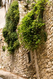 Weelderige vegetatie van groene klimop op oude steenvesting walll Royalty-vrije Stock Foto