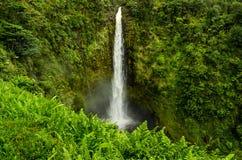 Weelderige Waterval in de wildernis van Hawaï Stock Fotografie
