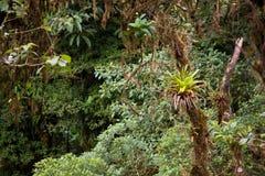 Weelderige wildernisvegetatie in regenwoud royalty-vrije stock afbeelding