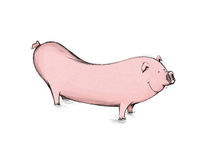 Weenie piggy. A pig that looks like a sausage or weenie Stock Photos