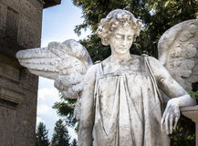 Weeping angel Stock Images