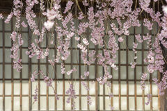 Weeping cherry blossoms. Lined weeping cherry blossoms in front of paper sliding door Royalty Free Stock Images