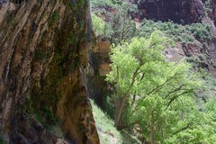 Weeping Rock Trail A stock photos