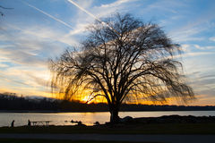 Weeping for Spring. Probably the most well known weeping willow in the Cleveland area, against a cool winter sunset Royalty Free Stock Photos