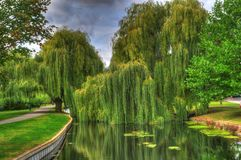 The Weeping Willow Stock Image
