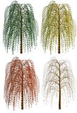 Weeping willow. 4 different renders of a weeping willow isolated on white background. Concept for tree in the four seasons winter spring summer autumn and winter royalty free illustration