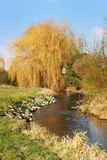 Weeping willow. The image shows a beautiful weeping willow at a small, winding river in Bavaria. This landscape picture was taken on a sunny autumn day royalty free stock photography