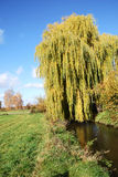 Weeping Willow. Autumn landscape in Bavaria with a weeping willow royalty free stock images