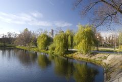 Weeping willow. On the lake bank Royalty Free Stock Images