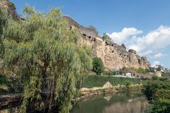 Weeping willow along Alzette river in Luxembourg city downtown Grund. Weeping willow along Alzette river in Luxembourg city and view at medieval fortification royalty free stock photos