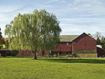 Weeping Willow and Barn. A rural Bucks County Pennsylvania scene with a weeping willow tree and an old red barn stock image