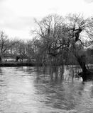Weeping Willow. A black and white photo of a weeping willow tree bending over the River Thames stock photos