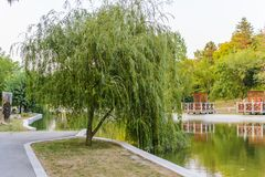 Weeping willow in Dobrich park Stock Photos