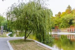 Weeping willow in Dobrich park Royalty Free Stock Photos