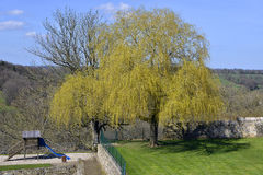 Weeping willow at Domfront in France Stock Photography