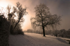 Weeping Willow Garden. Frozen garden with a weeping willow with soft sunlight Stock Photo