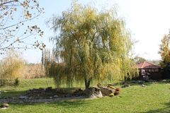 Weeping willow. And a gazebo for relaxing in the background. stock image