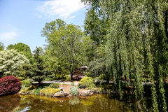 Weeping Willow in Japanese Garden Royalty Free Stock Photos